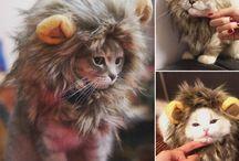 Одежда для кошек и собак / Cat clothes