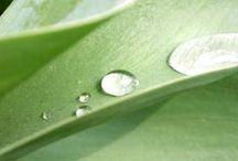 garden / anti bugs, neat gardens, diy, plants, flowers, tips