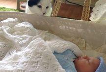 koty i niemowlaki