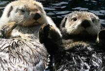 Otter Life