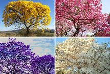 Árvores lindas