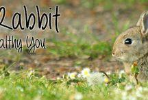 The Organic Rabbit