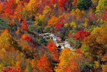 Fall on the Blue Ridge Parkway / The best of the best photos of the dramatic fall color change along the Blue Ridge Parkway in North Carolina and Virginia, featuring the most vibrant autumn reds, oranges, and yellows.