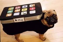 Techno Pugs