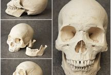 Reference - Human anatomy