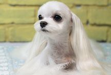 Pet & Grooming / Pictures of cute animals, pets and their style of grooming