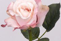 Zijden Rozen / Prachtige zijden rozen