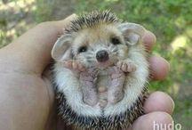 Baby - Tiere  ❤❤❤ Baby - animals / Bitte nur Baby - Tiere pinnen andere Bilder werden gelöscht  ❤  Please only baby - animals pinning other images to be deleted