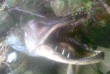 relax / rodinna rybacka