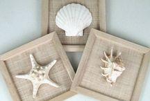 B.C shells