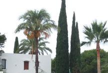 Spanyol képek