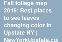 Fall Leaf Trip Ideas