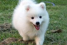White Fluffy Dogs / I love white fluffy dogs. I really want one!