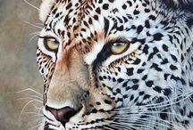 Wildlife/Animal Art