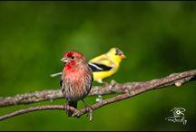 Birds / by Randy Pollock