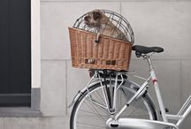 Pet's On Bicycles / Show us how you ride with your best friend.