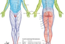 Physical therapy / by Serena Simons