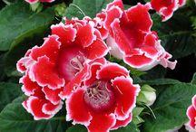Szobanövények, Indoor Plants, House Plants / Szobanövények, Indoor Plants, House plants,