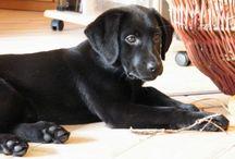 Puppy dog info