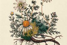 Ботанические старые картинки и растительное