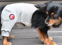 dog wear - pants with inner インナー付パンツ