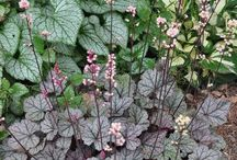 Favourite plants for a shady border / Clay soil acid