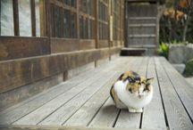 ねこ / I love cats