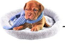 Wau-Wow: Auf den Hund gekommen / Außergewöhnlich, schick und stylisch soll es sein, besonders wenn es um Deinen besten Freund geht? Inspiration findest Du hier: alles für ein glückliches Hundeleben!