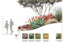 Plano Vegetacion