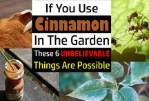 Cinnamon uses in the garden.