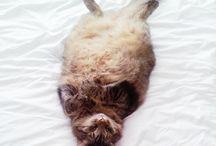 Bob / Photos of my favourite furry pet child, Bob.  / by Xanele Puren