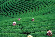 Taiwan Culture