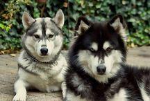 vermiste honden
