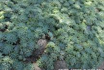AA Rastliny