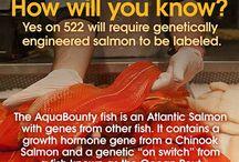 GMO truth alerts / by Carol Edwards