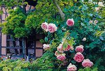Cottage Gärten