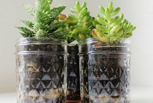 mason jars / by Rosemary Miller