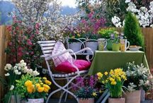 Decoración y jardines / Todo sobre flores, plantas, jardines, cultivo...