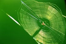20 facts about spiders / Spiders