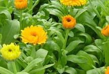 plante utile