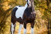Herfstfoto's paard