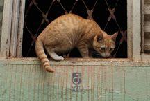 NININHOs / Gatos Gatas & Fotografia
