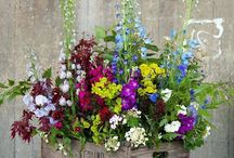 Flower stuff for my WEDDING!! / by Megan