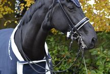 Brunink Dressage / My equestrian life