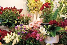 Çiçek izmir / T.c. Tuğçe Inanlı Çiçek izmir panosuna kaydettiniz Yalı Çiçekçilik müşterilerine geç saatte teslim yapıp, saatinde teslim ettiğini söylüyor. Müşteriden özür Dilemek yerine istediğiniz yere şikayet edin diyor. Aynı durumda olmamak için alışveriş etmeyiniz ...