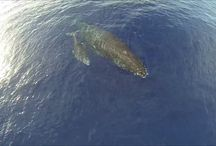 Drone Videos / Videos of drones in Hawaii. / by Hawaii Drones