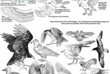 anatomy birds