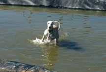 Circe, my crazy Greyhound