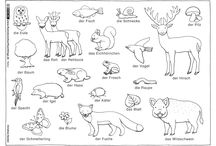 Tiere Schule