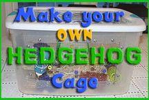 Pet Hedgehogs / Interesting stuff about pet hedgehogs